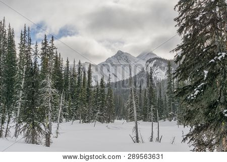Forested Rocky Mountains In The Winter, Alberta Canada.