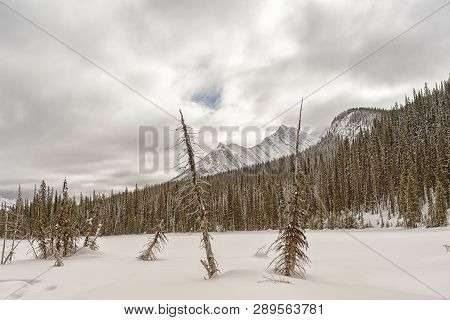 Winter Landscape In The Snowt Rocky Mountains.