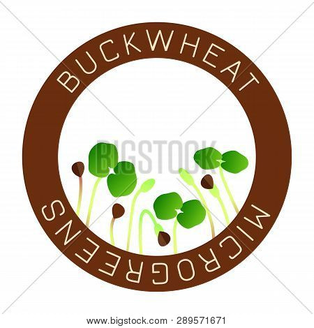 Microgreens Buckwheat. Seed Packaging Design, Round Element In The Center. Vitamin Supplement, Vegan