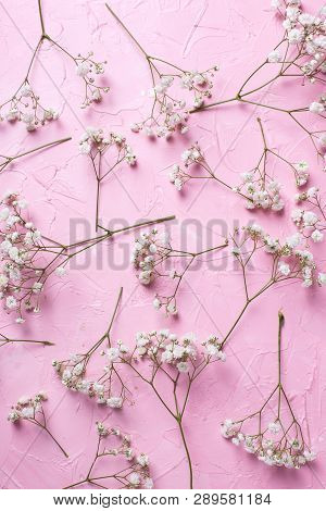 Pattern From Fresh White Gypsofila  Flowers On  Pink Textured Background. Top View. Flat Lay. Vertic