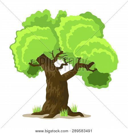 Deciduous Tree In Four Seasons - Spring, Summer, Autumn, Winter. Nature And Ecology. Natural Object