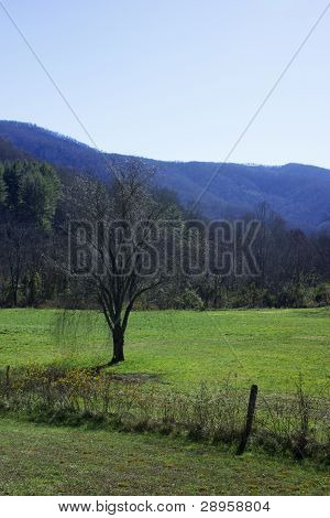 North Carolina Green Pasture with Mountain Background