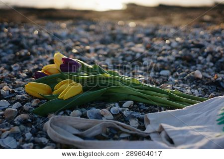 Tulips On The Beach A Bouquet Of Flowers