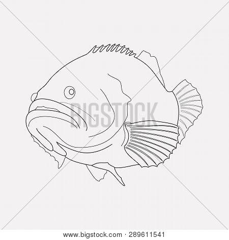 Grouper Fish Icon Line Element. Vector Illustration Of Grouper Fish Icon Line Isolated On Clean Back