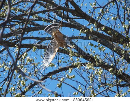 The Hawk Knows How To Keep The Snake From Biting Its Flesh And Feathers. The Hawk Is Actually Hangin