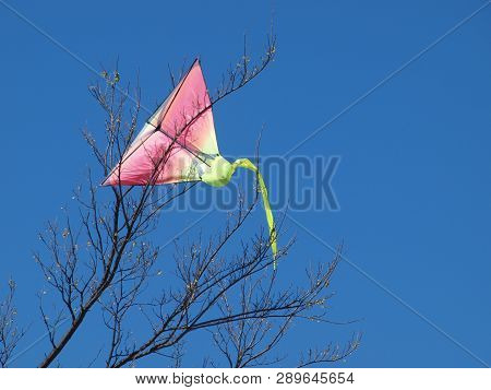 A Pink Kite On A Blue Sky Background Is The First Tree Landing Seen This Season. The Tree Overhangs