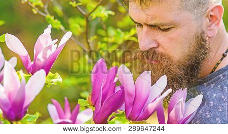 Bearded man with fresh haircut sniffs bloom of magnolia. Man with beard and mustache on calm face near magnolia flowers, background defocused. Hipster enjoys aroma of purple blossom. Perfumer concept poster