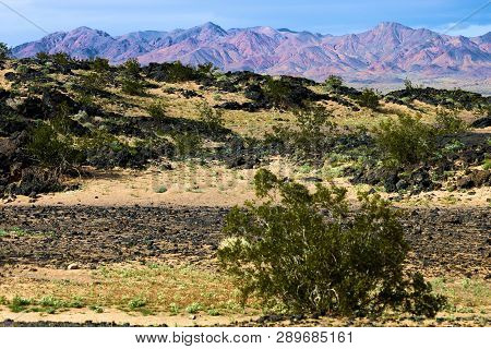 Chaparral Shrubs Including The Creosote Bush On An Arid Plain With Volcanic Lava Rocks Taken At Ambo
