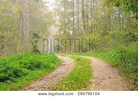 Single Lane Gravel Road With Grass Covered Median Leading Through Forest On Misty Morning