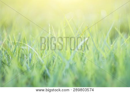 Blurred Grass Out Of Focus Tropical Green Grass Field Abstract Background