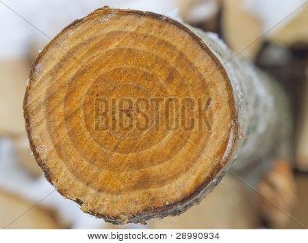 Cross-section Saw Cut Of A Log Of An Aspen.