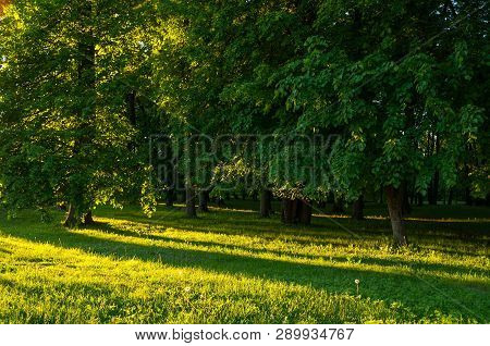 Spring landscape - park trees with grass on the foreground and sunlight shining through the forest trees. Sunny colorful spring nature