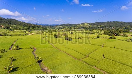 Aerial View Of Paddy Field At Mae Hong Son, North Of Thailand. Agriculture Landscape. Aerial Photogr