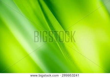 Close Up Beautiful View Of Nature Green Leaves On Blurred Greenery Tree Background With Sunlight In