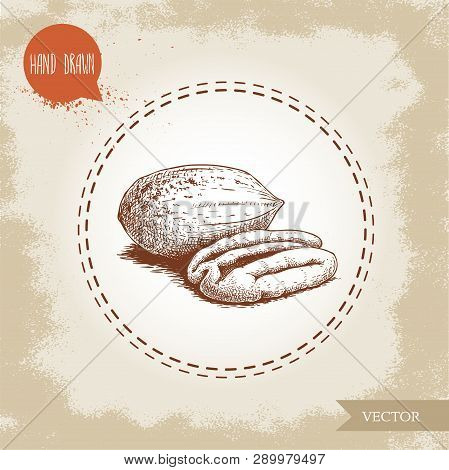 Pecan Nuts. Hand Drawn Sketch Style Peeled And Whole Pecan Nuts. Organic Snack And Food Vector Illus