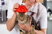Cat flu and a hot water bottle on head poster