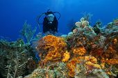 Woman Scuba Diving Over a Coral Reef in the Gulf of Mexico - Cozumel poster
