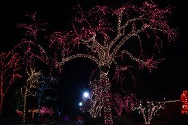 Trees Lit Up In Christmas Holiday Lights Or Zoo Lights At The Lincoln Park Zoo, Chicago, Il December