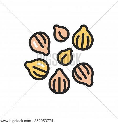 Coriander Color Line Icon. , Seasoning. Vector Illustration