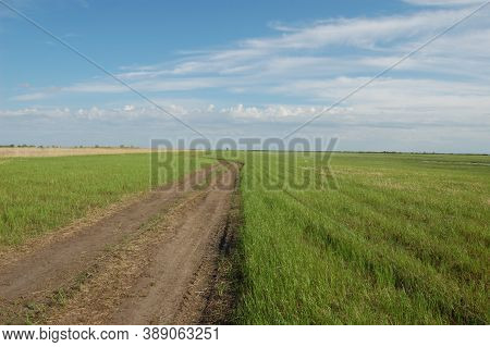 Wide Green Field, Green Grass, Road Through The Field, Blue Sky In Clouds