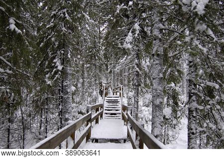 Wooden Staircase In The Middle Of The Forest, Snow, Frost, Frost, Snowdrifts, Silence