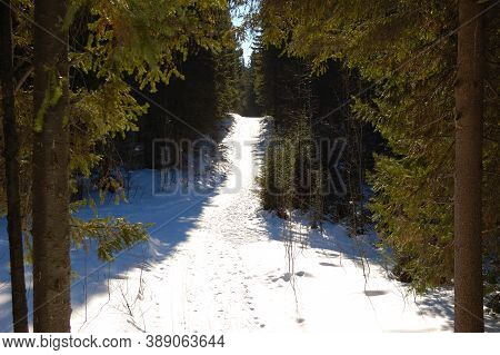 In The Winter Forest, Path In The Forest, Trees In The Snow, Snowdrifts Winter, Frost, Sun