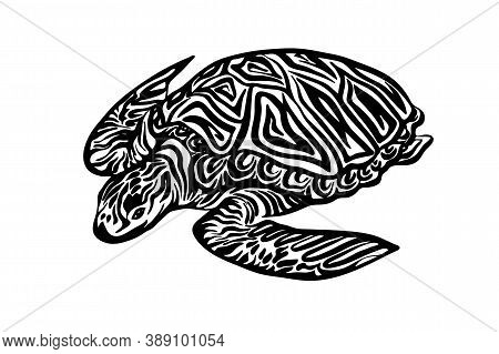 Hand Drawn Ornate Turtle Sketch. Vector Black Ink Drawing Animal Isolated On White Background. Graph