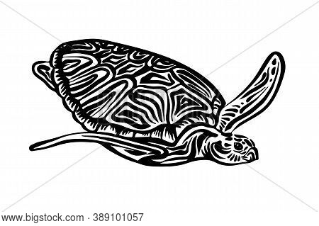 Hand Drawn Swimming Ornate Turtle Sketch. Vector Black Ink Drawing Animal Isolated On White Backgrou
