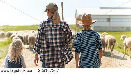 Rear On Caucasian Mother Shepherd Walking With Small Son And Daughter In Pasture To Graze Sheep Floc