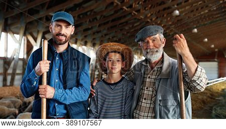 Three Male Generations In Green Field At Cattle Farm. Caucasian Grandfather, Father And Son Smiling