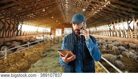 Caucasian Man Shepherd Walking In Shed With Cattle Animals And Talking On Mobile Phone. Male Farmer