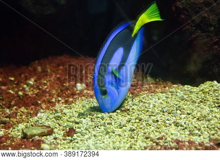 Bright Striped Tropical Fish Floating In The Warm Sea Among The Stones