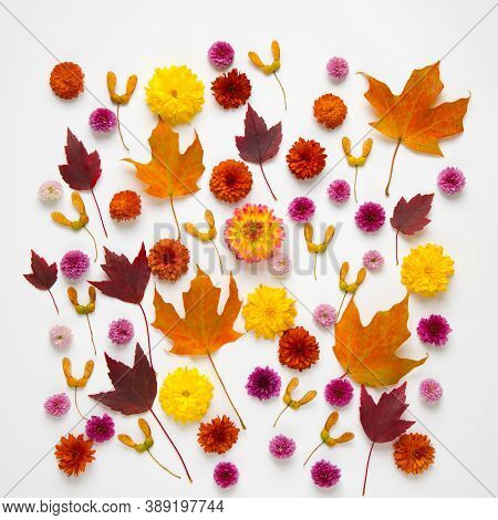 Background From Autumn Leaves, Seeds And Flowers.