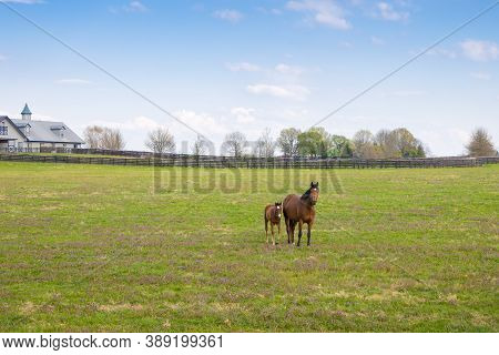 Horses At Horse Farm. Mares With Foals On Green Pastures. Spring Country Landscape.