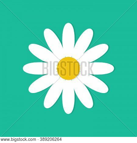 White Daisy Chamomile Isolated On Background. Daisy Flower Vector Illustration. Floral Background. F