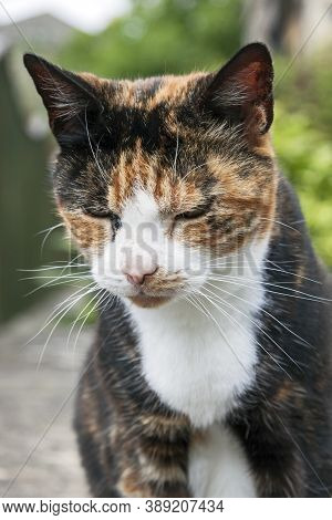 A Sleepy Calico Cat Sitting By The Side Of A Road