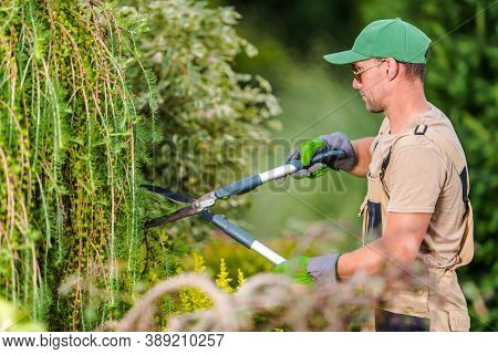 Landscaping And Gardening Industry. Seasonal Garden Plants Trimming Work Performed By Professional C