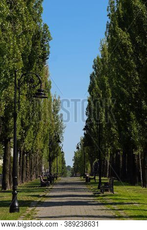 A Long Summer Alley With Trees On The Sides, Lampposts And Empty Benches.