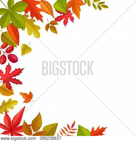 Frame Of Fallen Leaves, Vector Autumn Foliage Of Maple, Oak And Chestnut, Rowan With Elm. Cartoon Bo