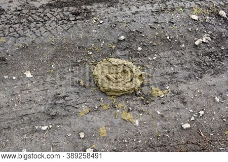 Fresh Cow Feces Lies On The Ground. Bovine Feces In The Shape Of A Circle.