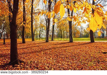 Autumn landscape. Autumn city park, orange autumn fallen leaves on the foreground. Colourful autumn park in sunny autumn  October morning. Autumn park landscape