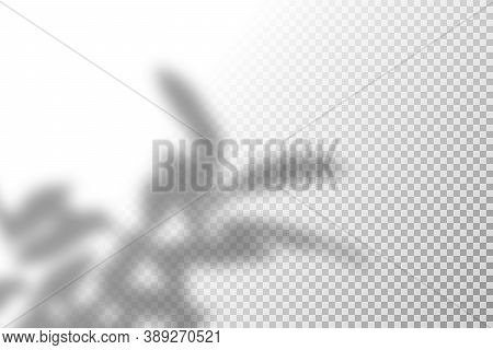 Vector Illustration Of Realistic Shadow Overlay Effect. Blurred Transparent Soft Light Shadow Of Tre
