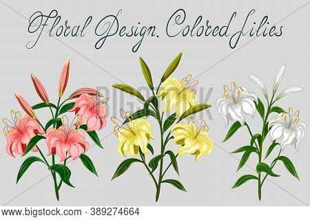 Collection Of Multi-colored Lilies.colored Illustration With Multi-colored Lilies And Text.