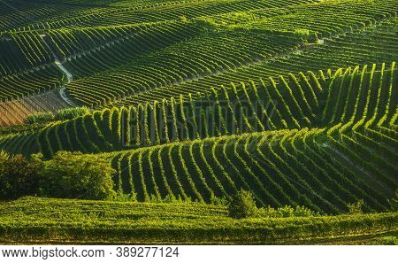 Langhe Vineyards Sunset Abstract Panorama, Barbaresco, Unesco Site, Piedmont, Northern Italy, Europe