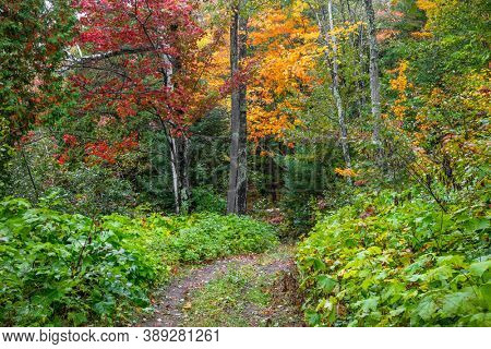 Autumn trees along scenic forest trail in Michigan upper peninsula, during early autumn time.