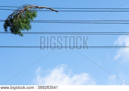 Evergreen Tree Branch Caught In Power Lines With Blue Sky In Background. Heavy Wind Storm Results. P