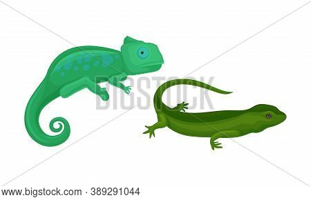 Green Chameleon And Lizard As Reptile Or Amphibians Vector Set