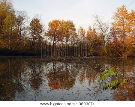 Little Lake And Autumn Trees
