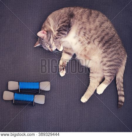 A Tired Fat Cat Lies On A Yoga Mat After A Sports Workout. Concept Of Isolation During The Coronavir