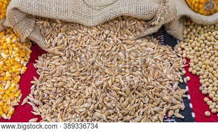 Oat Grains In Husks Crops From Sack